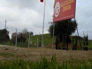 Adana'da Fatih Terim adına hatıra ormanı kuruluyor